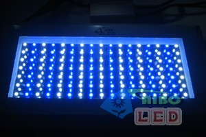 aq-120w2pblue-white