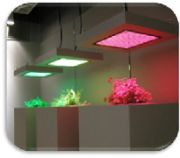 Customize LED grow lights